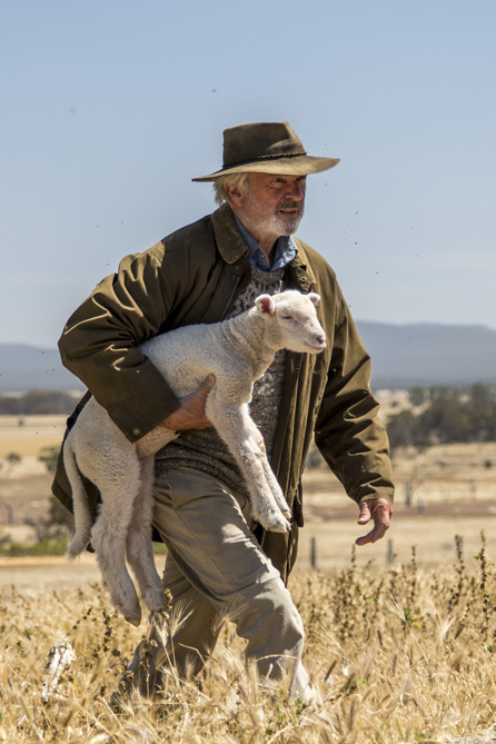 Sam Neil carrying a lamb in Mount Barker